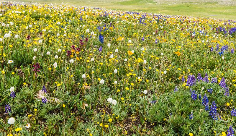 Spring flowers at 10,000 feet.