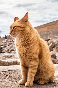 Fornells Cat, Menorca