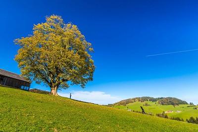 2014-10-31-Appenzell-Zurich-47