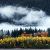 Fall Colors Along Alouette Lake