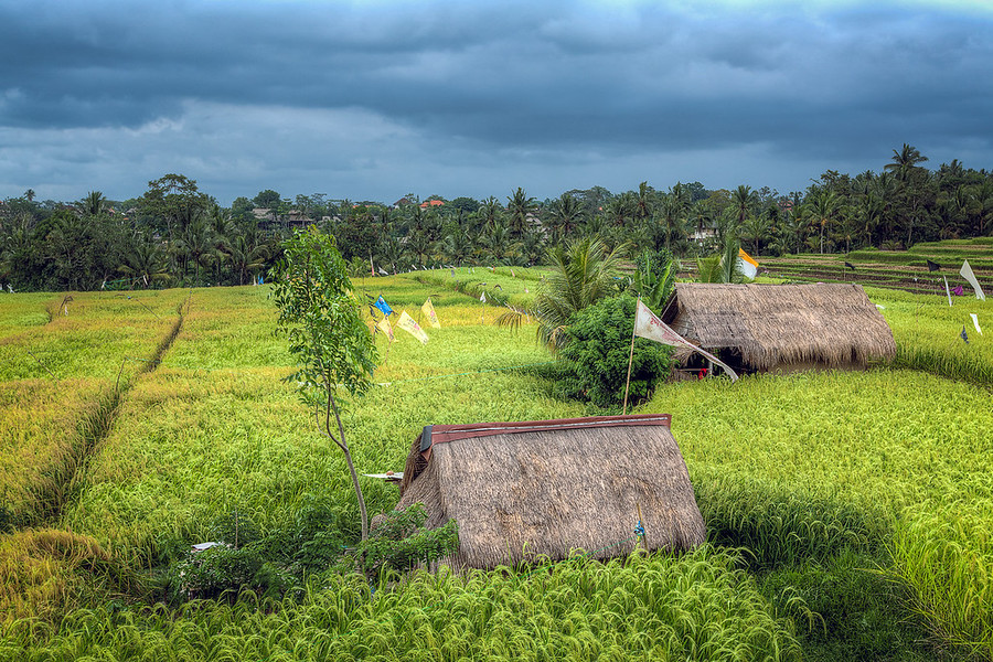 Rice Huts of Bali. This is an HDR photo of some huts out in the middle of some rice fields in Bali. It's pretty interesting how it's all set up. There are the flags hanging some with cans attached so the farmers can pull on some rope connecting them all together causing the cans to clank, which scares all the birds away. It's this giant network of rope and cans. Kind of cool.