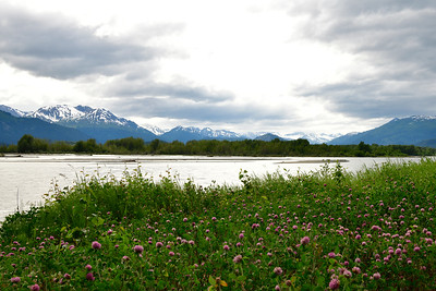 Wildflowers Along the Chilkat