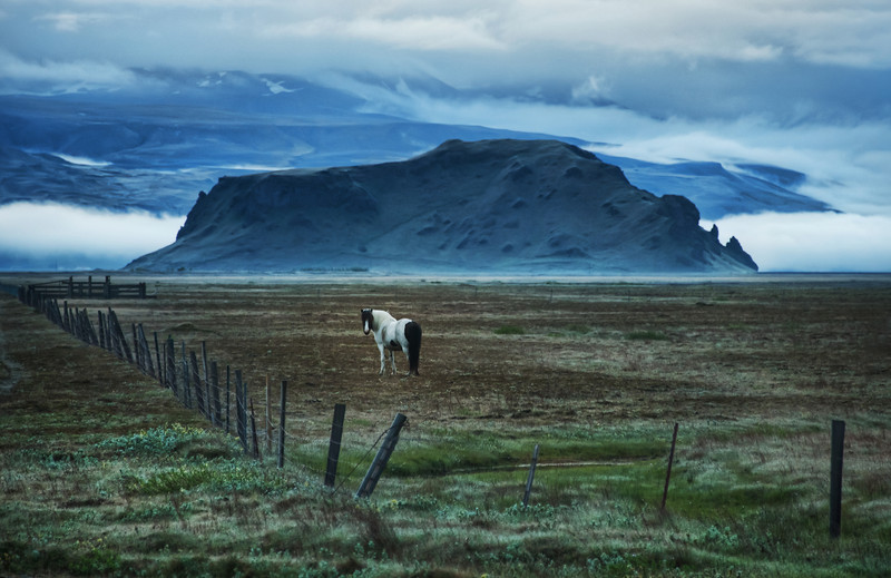 "<h2>Horse in Landscape</h2> <br/>Remember what I said a few days ago about reasons for no stopping for almost every horse photo in Iceland?  Forget I said that.  I don't know what I was talking about.  Go ahead and stop...  I mean, how on earth can you pass this buy?<br/><br/>These horses remind me a bit of the sirens in Odysseus, distracting me from my destination...  But, really, that analogy falls apart because I had no destination in mind, so I allow myself plenty of wonderful distractions.<br/><br/>- Trey Ratcliff<br/><br/>Read more <a href=""http://www.stuckincustoms.com/2011/07/26/horse-in-landscape/"">here</a> at the Stuck in Customs blog."