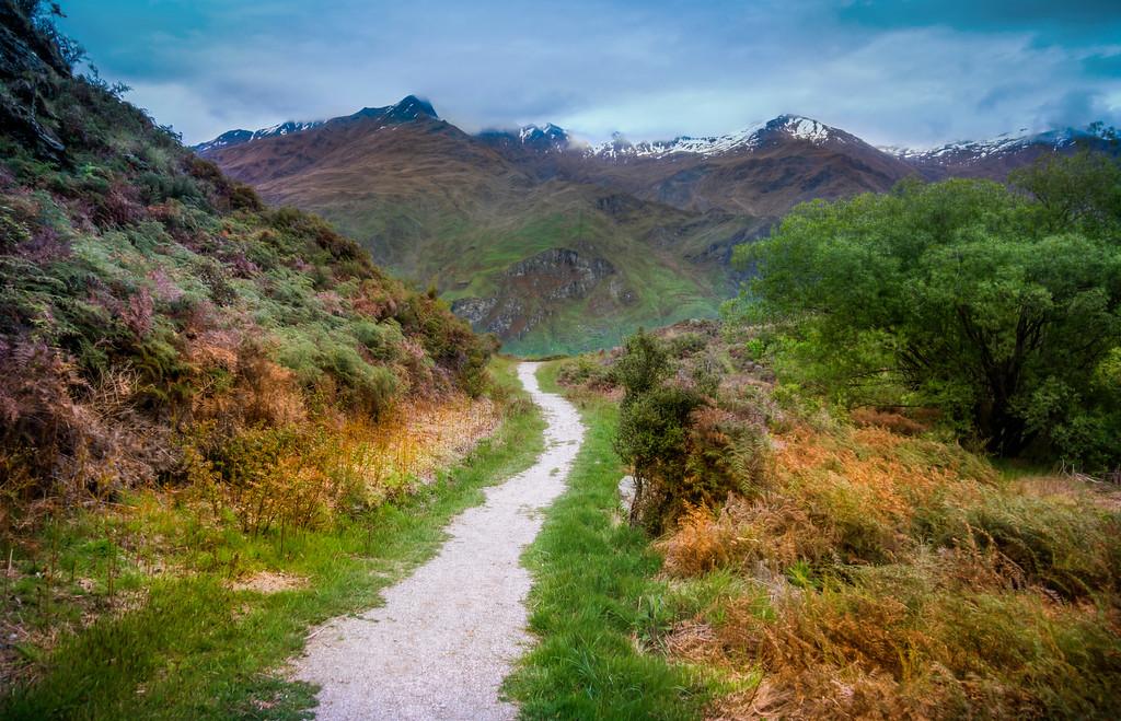 A Path Near Diamond Lake