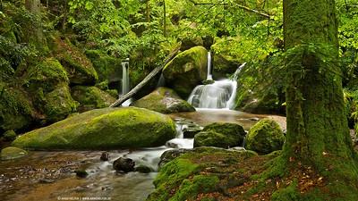 a little creek in black forest