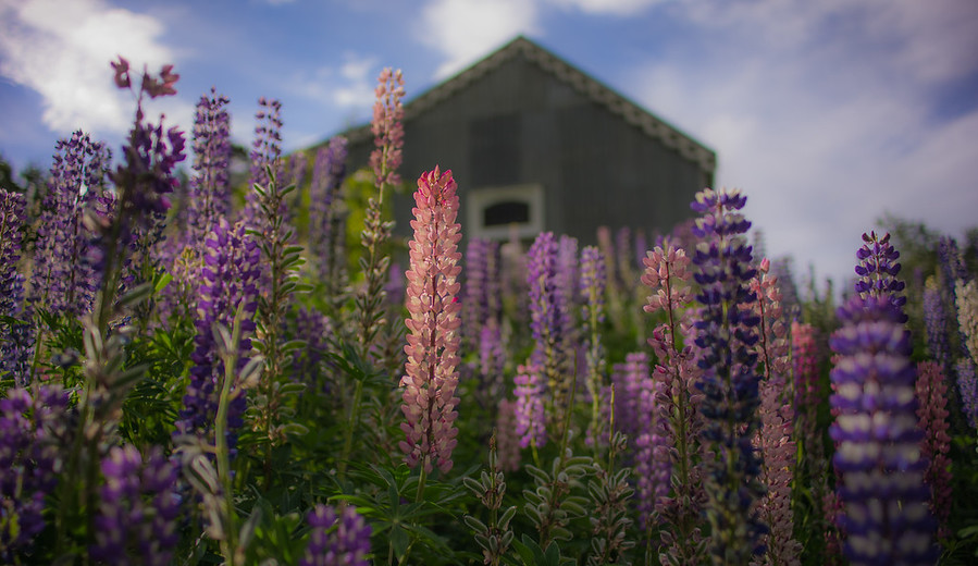 The Lupins at F/1.4