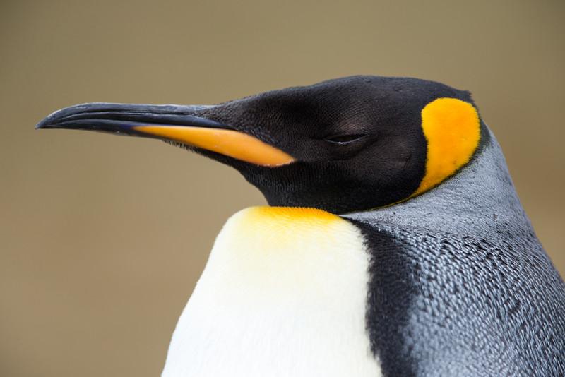 Falklands--2