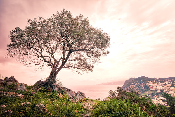 Capri And The Lonely Tree