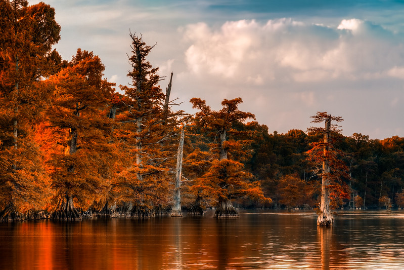 Fall Cypress of Reelfoot