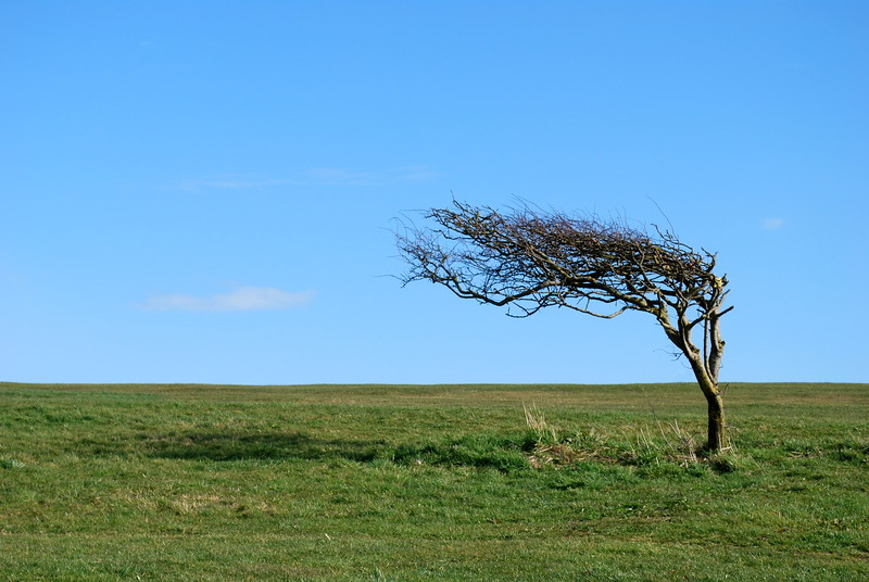 A very windswept tree on the top of the cliffs at Eastbourne.<br /> <br /> This picture was my first picture to win a competition.