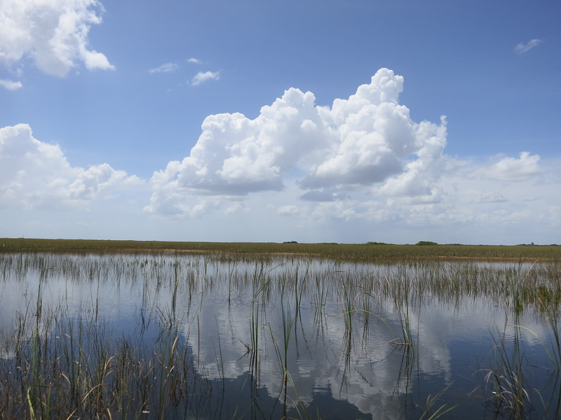 Reflection on the Glades