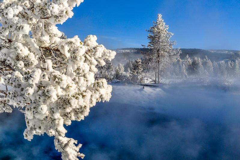 Ghost Trees & Blue Pools