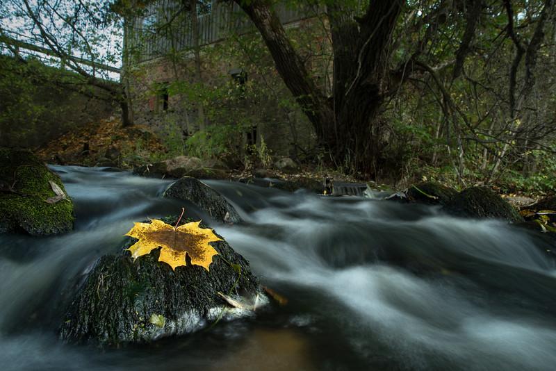 Sügis Väiksel Emajõel Autumn on the river Väike Emajõgi