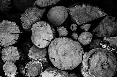 PATTERNS IN NATURE (Black & White)
