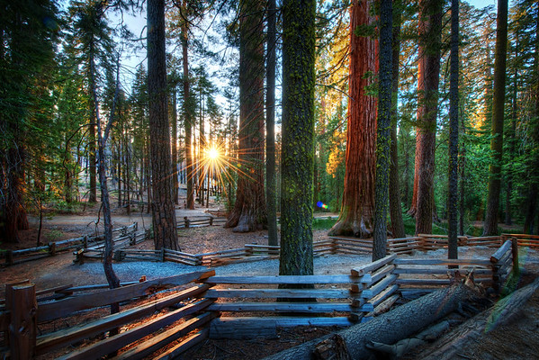 Walking in Yosemite Here's a photo from a walk along this beautiful little path in Yosemite. It looks very serene and welcoming, yes? Well it is! I was sad I only got to spend one day here in the forest… I'd like to go back. Actually, I'd really like to get to Yosemite when it is snowing. I bet there are a thousand interesting photos all over the place… but now, by the time out I find out it is snowing, it will take me too long to get over there! :(I took this one during the crazy photowalk there… we had so much fun!- Trey RatcliffClick here to read the rest of this post at the Stuck in Customs blog.