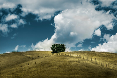 Lonesome tree on hill