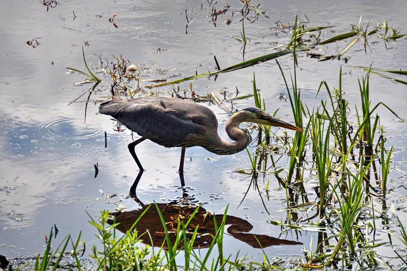 Sensitive Wildlife on the Bruce Freeman Rail Trail  June 2020