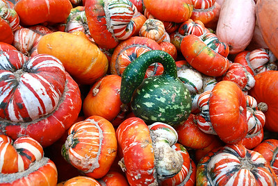 Avila Barn gourds.
