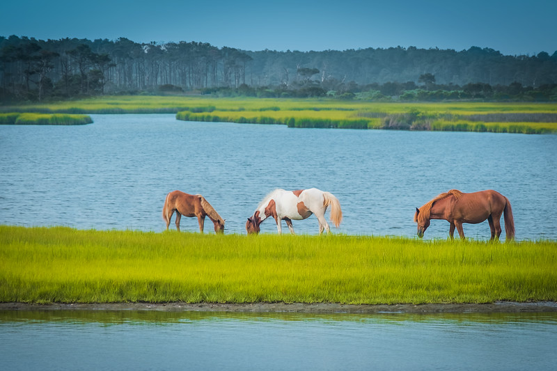 Travel_Photography_Blog_Maryland_Assateague_State_Park_Ponies