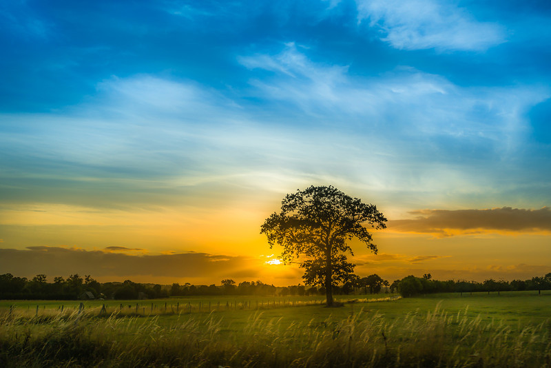 "We drove from Cherbourg in Normandy to Saint Malo in Brittany while the sun was setting. I opened the window and shot this tree. Not two sunsets are alike, and I would love to photograph each single one of them. Photo by: Jacob Surland,  <a href=""http://www.caughtinpixels.com"">http://www.caughtinpixels.com</a>"