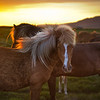 "<h2>The Golden Horse in Iceland</h2> <br/>We worked on this one tonight in the webinar, and I hope people didn't get too bored.  It's very strange, because I am talking to myself for over an hour, and I only get occasional feedback when Andrea stops watching reruns of Ricki Lake.  Anyway, I'll just assume that people like seeing it, since people keep showing up.<br/><br/> - Trey Ratcliff <br/><br/>Read more <a href=""http://www.stuckincustoms.com/2011/05/20/the-golden-horse-in-iceland/"">here</a> at www.stuckincustoms.com."