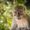 Macaco Pensativo