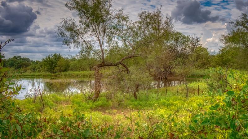 Pond_Through_The_Hedgerow