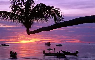 Ko Tao Palm, Thailand