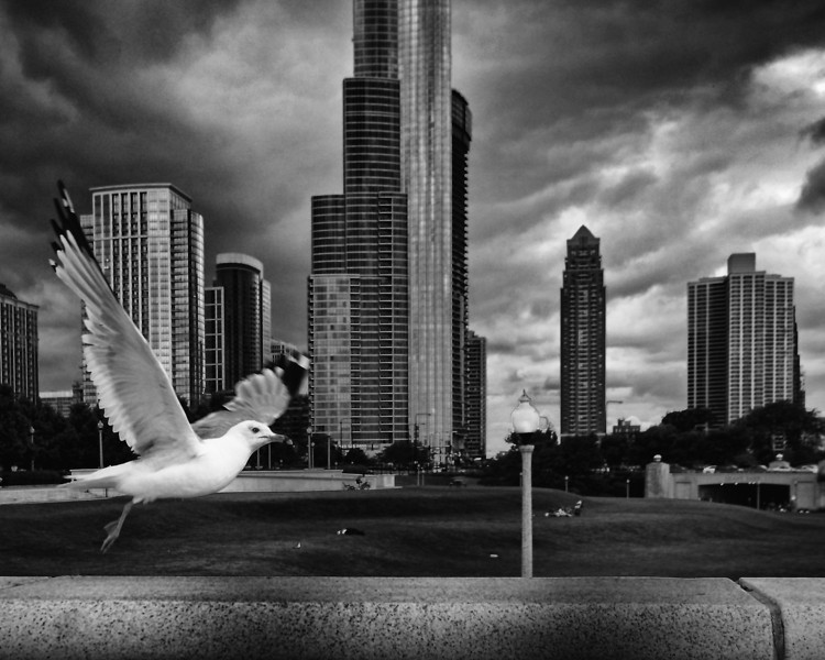 Chicago Skyline with Pigeon