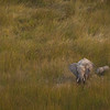 Mommy And Baby Elephant