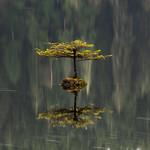 Fairy Lake tree
