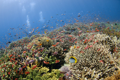 Colorful Shallow Reef