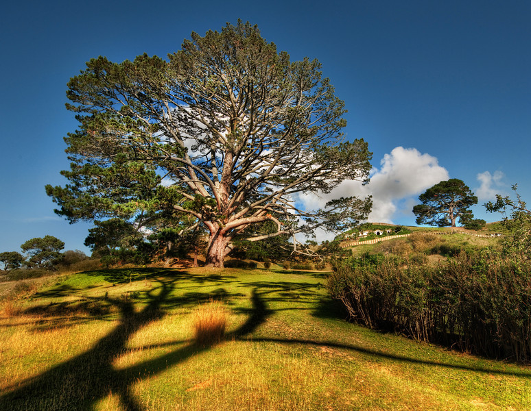 "<h2>Bilbo's Hobbit Hole and the Party Tree in the Shire</h2> <br/>I showed my 8-year-old son all the Lord of the Rings movies prior to our trip to NZ.  He then re-watched the first one three times on the car trip... so he was just as excited as I when we arrived.<br/><br/>You might remember Bilbo Baggins' hobbit hole and all the scenes with Frodo and Gandalf inside.  That is it right there, on the right hand side at the top.  The huge tree on the left is the ""party tree"", which was the centerpiece for the big party for Bilbo's birthday.  It was the one of the main reasons that Peter Jackson chose this remote farm outside of Matamata on the North Island.<br/><br/>- Trey Ratcliff<br/><br/><a href=""http://www.stuckincustoms.com/2010/03/07/hobbit-shire/"" rel=""nofollow"">Click here to read the rest of this post at the Stuck in Customs blog.</a>"