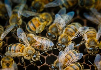 Healthy Hive