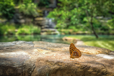 'Butterfly' ~ Branson, MO