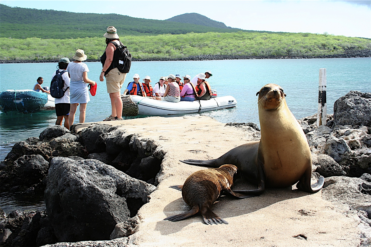 Galapagos Islands, Eucador, Zodiac Landing blocked by Sea Lions.<br /> This is a typical seen in the Galapagos, the animals are everywhere, and mother Sea Lions are VERY protective of their Pups.