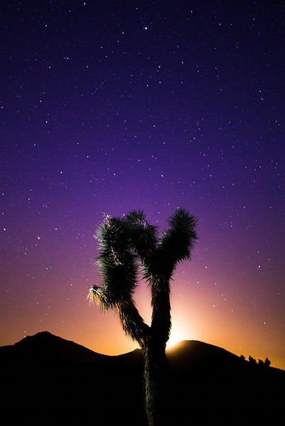 As the moon was giving its last light before setting behind the mountains, I was able to fire off one last shot of a silhouetted Joshua Tree before the night when completely dark.SpecsCamera Sony A7rISO: 800Aperture: F2.8Shutter: 30/1