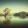 Lone Tree on the Lake