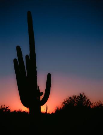 Sunset Del Seguaro