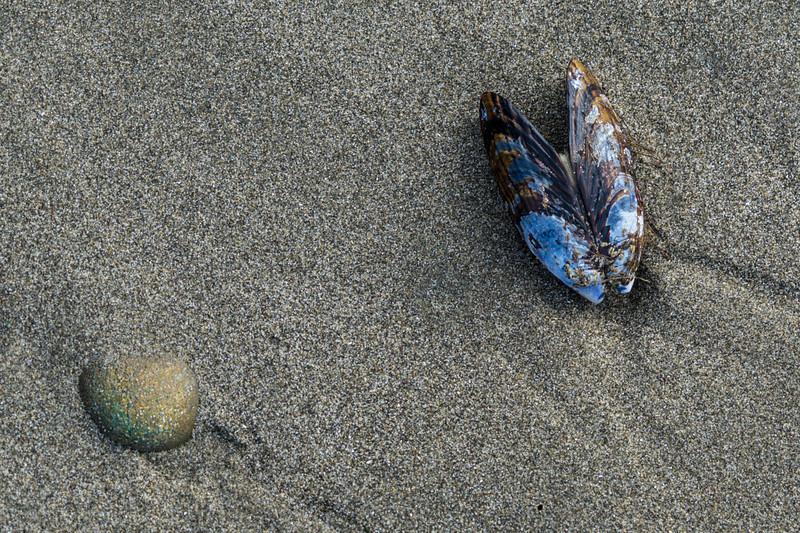 Seashore Still Life, Second Beach