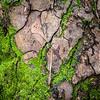 Mossy Cracks