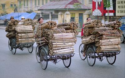 Transporting Wood, Ninh Binh Vietnam