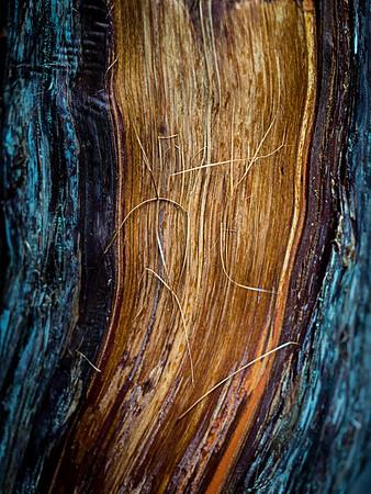 Blood wood