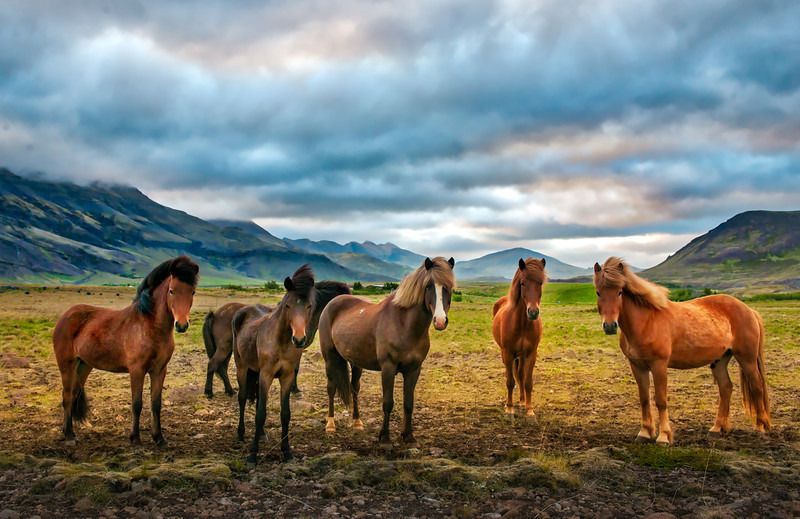 The Five Horsemen Of The Icelandopacalypse