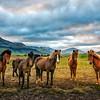 The Five Horsemen Of The Icelandopacalypse