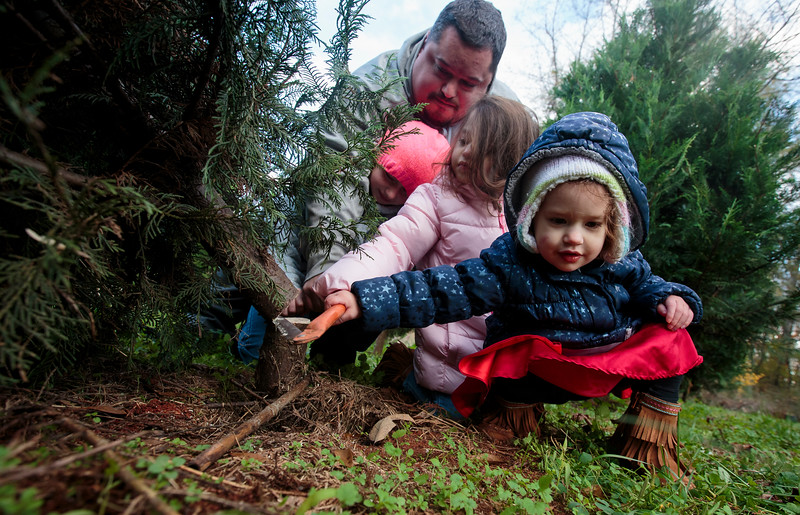 Nadav Soroker/Times-Georgian<br /> <br /> Audree White, 2, front, Adriana White, 4, Abbey White, 10, and Mitch White work together to cut down a Christmas trees at Red Land Nursery, on Monday, November 26, 2018.