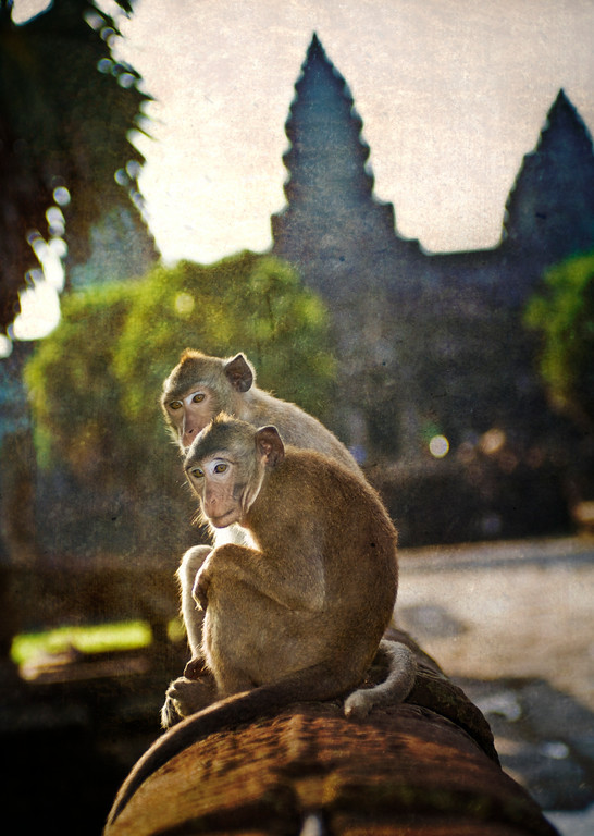 Monkey Love A male monkey and his mate relax near an ancient naga at the ruins of Angkor Wat in Cambodia.This is the first shot from a new upcoming tutorial that describes some new techniques with which I am experimenting.  I hope you like it!- Trey RatcliffClick here to read the rest of this post at the Stuck in Customs blog.