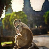 "<h2>Monkey Love</h2> <br/>A male monkey and his mate relax near an ancient naga at the ruins of Angkor Wat in Cambodia.<br/><br/>This is the first shot from a new upcoming tutorial that describes some new techniques with which I am experimenting.  I hope you like it!<br/><br/>- Trey Ratcliff<br/><br/><a href=""http://www.stuckincustoms.com/2007/06/19/monkey-love/"" rel=""nofollow"">Click here to read the rest of this post at the Stuck in Customs blog.</a>"