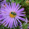 Green Bee Beauty Collecting Perfume