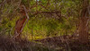Lake_Waco_Swamp